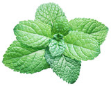 Spearmint or mint on white background. Top view. - 188338504