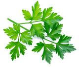 Parsley herb. Macro shot of small branch. - 188338556