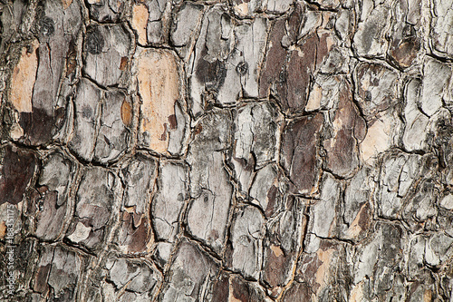 Foto op Plexiglas Brandhout textuur Texture of the bark of a pine tree