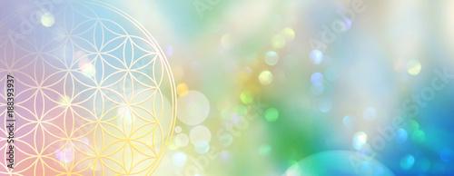 Leinwanddruck Bild Banner Blume des Lebens in einem Lichtermeer aus Regenbogenfarben