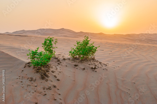 Deurstickers Abu Dhabi Desert dunes in Middle East