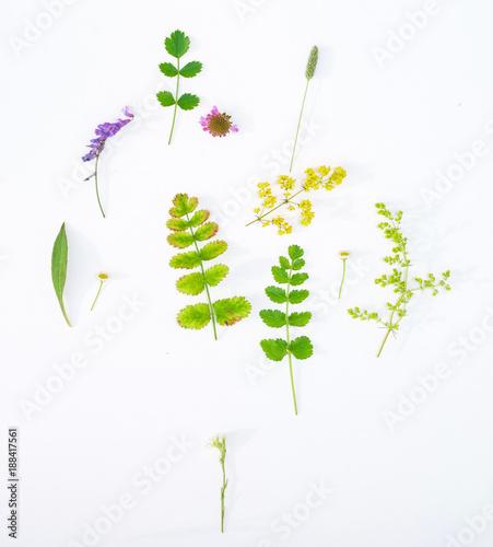 nature composition - 188417561