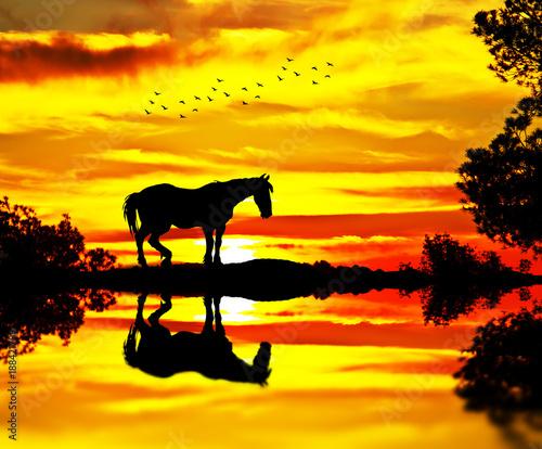 Fotobehang Geel caballo junto al lago