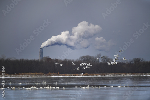 Swans on Frozen River and Smokestacks