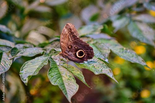 Schmetterling - 188433557