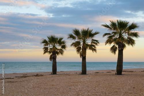 Papiers peints Cappuccino Three palms on the beach