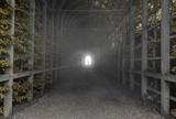Tunel - 188487148