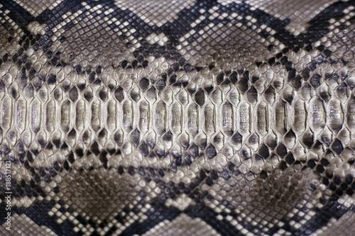 leather snake