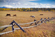 Grazing horses, western fence - 188522537