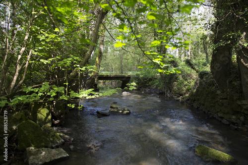 Papiers peints Rivière de la forêt Petit Pont