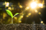 Young plant in the morning light on nature background - 188544739