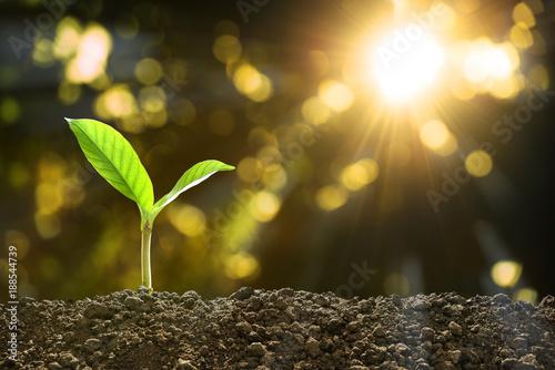 Leinwandbild Motiv Young plant in the morning light on nature background