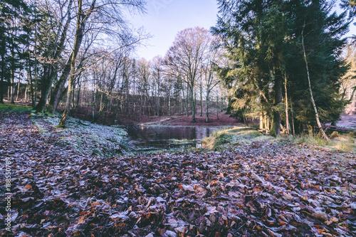 Foto op Plexiglas Lavendel Winter Forrest