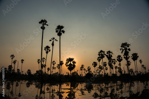 Foto Murales sunset with silhouette palm trees.