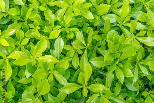 Tuinposter Gras background of fresh spring green grass