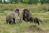 Elephants, Maasai Mara National Reserve, Kenya
