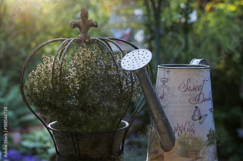 Foto Murales Metallkrone mit Thymian und Zinngießkanne im Garten