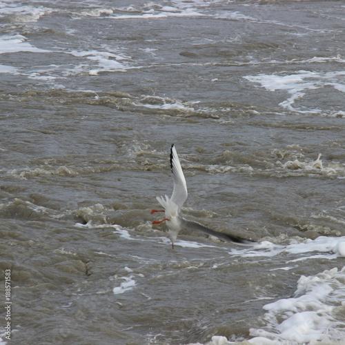 Staande foto Noordzee Möwe im Sturzflug