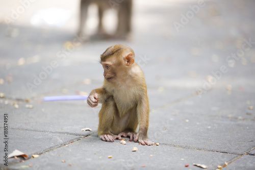 Poster Monkeys of Monkey Hill Thailand 2