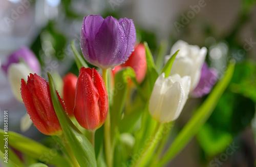 Foto Murales Tulips bouquet with dew