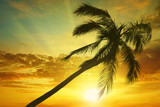 Silhouette coconut palm on background bright sunset. Toned photo.