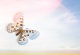 Butterfly. - 188591967