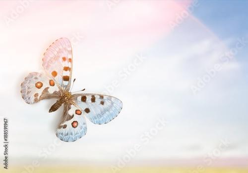 Aluminium Vlinder Butterfly.