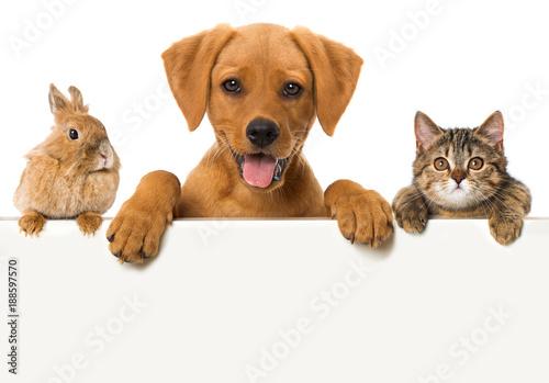 Haustiere blicken über eine Mauer Poster
