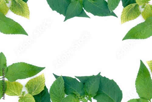 green leaves border on white background - 188608795