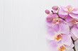 Pink orchid flower on a white wood textured background, space for a text. - 188609750