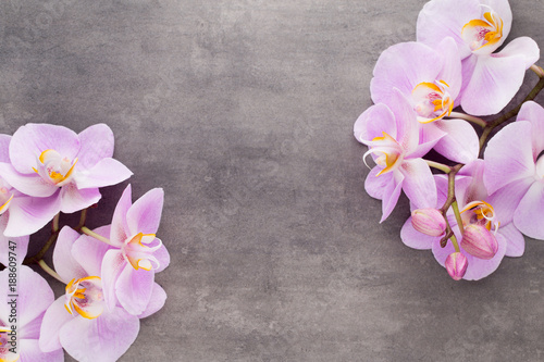 Pink orchid flower on a gray textured background, space for a text. - 188609747