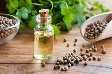 A bottle of coriander essential oil with coriander seeds and cilantro leaves