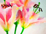 Day Lillies in Watercolor - 188617588