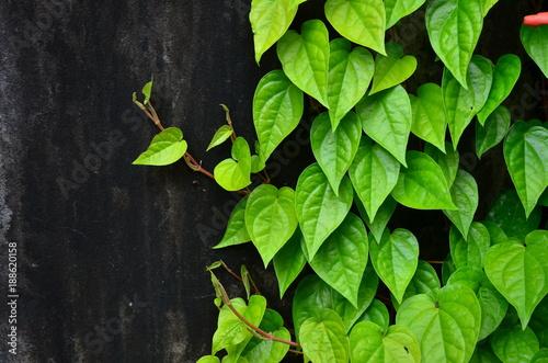 zielone-liscie-i-kwiaty-z-owadami-w-odswiezajacy-sposob