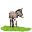 donkey standing in the grass and looking in the direction of sketch vector graphics color picture