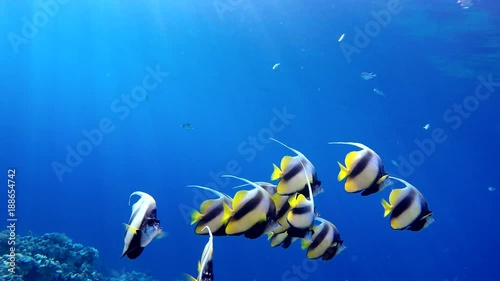Reef and beautiful fish. Underwater life in the ocean. Tropical fish.