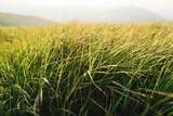 green grass at sunset - 188657360