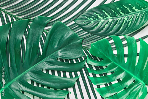 Tropical Palm Fresh Green Leaves Background. Summer Design. Art Bright Summer Layout. Nature Beach leaves background. Minimal. Detail