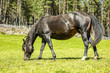 Beautiful horse in the pasture - 188664713