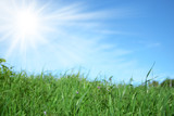 Erba verde con cielo azzurro e sole splendente
