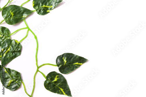 Foto Murales Green leaves on white background. Top view. Tropical concept