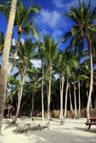 Saona island beach - 188718100