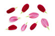 Small red flower Petals isolated on a white background.