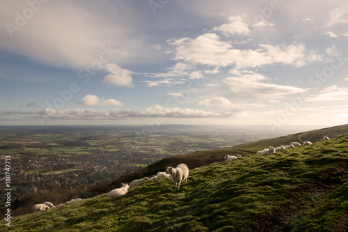 Foto op Canvas Wit Sheep on the Malvern Hills Worcestershire
