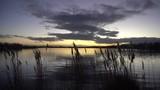 soleil couchant violet sur un étang avec des roseaux en premier plan - 188751364