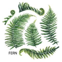 Watercolor fern leaves © Ekaterina Glazkova