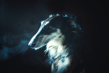 Portrait of the black Russian hound dog with a tan face, collar and eyebrows on a dark background in the moon light and snowflakes