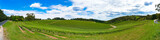 Long panorama of vineyard with green grape vines on a hills
