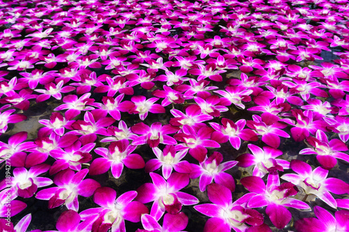 Leinwanddruck Bild pile of orchid is floating on the surface of water for relaxation,mediation,peace concept.