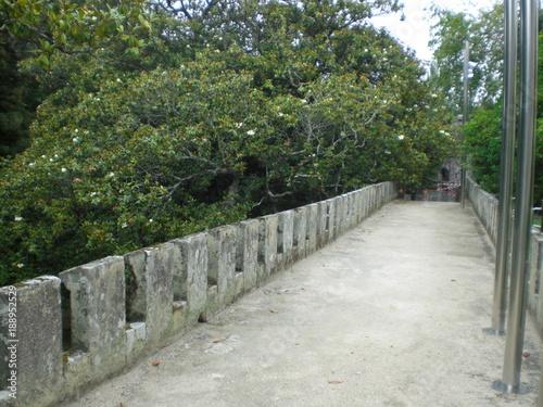 Fotobehang Weg in bos castrelos vigo